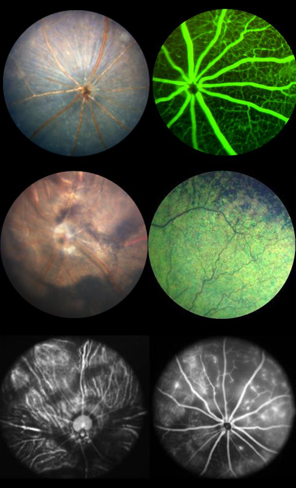 Animal Retina images