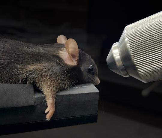 Mouse Retinal Imaging